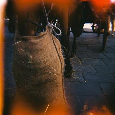 Lomo.Firenze.Caballo